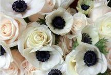 Floral / All things Flowers / by Jamie Skolnik