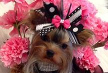 puppies and their accessories / by Deb Quallo-Shaidle