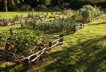 Gardens II: Potager | Cutting | Herb | Grasses / by Isabeau Grey