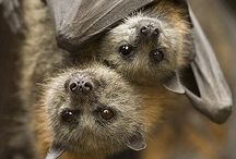 Bats / by Kathleen Smith