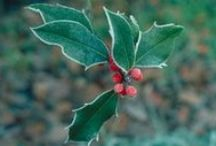 Growing through Winter. / Preparing your garden for winter and growing frost tolerant varieties . / by GrowVeg.com