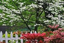 Habitat - Landscape Love / Flowers and decorative plants, garden art, landscaping tips and ideas / by Cathy Prothro