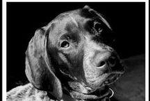 Tucker Whiskey & Boomer Gauge / by Julie Holmes