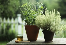 Plants / by Sofy Cohen de Nacach