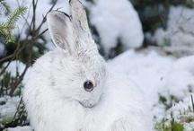 Bunnies / by Aurelie Lily