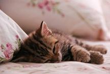 Cute animals / by Aurelie Lily