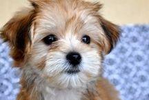 Cute. / dogs, and cute things  / by Melissa Platt