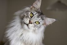 Cats / by Rebekah