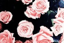 flower me / by Nicole Hutnyk
