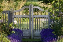 Garden Ideas / If you are looking for me I will be in my garden.... / by JoDina .