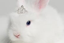 all about bunnies / All about bunnies.... / by JoDina .