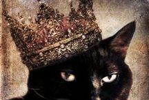 kitten love... / by Kitty Kentwell