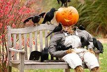Fall / by Tam P