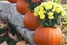 Fall & Halloween Ideas  / by Kelly Batey