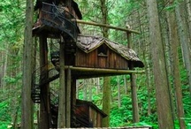 Tree House / by Ellis Home and Garden