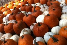 Pumpkin Patch / by Ellis Home and Garden