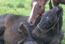 horses / by Diana Bailey
