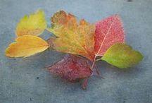 "❦ⓐⓤⓣⓤⓜⓝ❦ / ""Autumn, the year's last, loveliest smile."" ~William Cullen Bryant / by ᎯʊᎴℜᏋᎩ ♡ ᎵᎯℜᎥᏕ"
