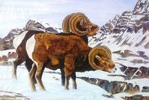 My Wildlife ART / Hiser Wildlife ART / by Doug Hiser