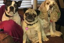 Cute Pooches  / I've been a dog lover my whole life.  My Mom told me of a story when I came home from Kindergarten with a whole pack of dogs following me.  Of course, I wanted to keep them!   / by Dorothy