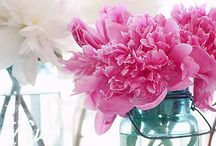 Peonies, poppies and other Pretties / Flowers / by Kim Zimmer