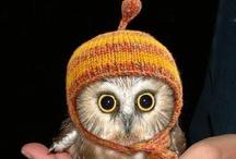 OWL / Mis colección de lechus / by Gabriela Nieves