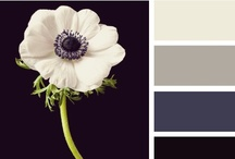 Pretty Flowers / by Debra Viccars