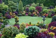 Gardening: Plants & Flowers / by Lisa