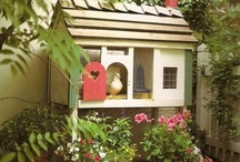Cool Chicken Coops / by Lisa