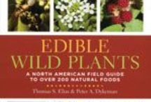 Edible Wild Plants / All Things Edible Wild Plants, Foraging Wildcraft Wild Food Recipes  Stay on topic when posting.  This is just my group board for more foraging visit my boards. / by Prepare4Survival