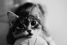 Pets / by Wilhelmina Chik