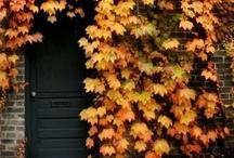 Autumn Blaze / by Donna Graves-Roll