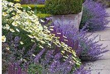 Garden Jealousy / by Katie Ketelsen