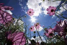 ahhhh flowers  / by Cheryl Engel LaMontagne