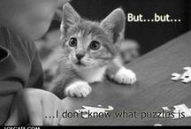 Cats with Captions & Cartoons / by Sarah db