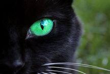 Green with Envy / by Ida Bayuni
