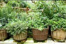 Growing & Gardening / by Adel Zeller