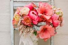 Wedding  / by Hannah Lutke