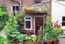 gardening herbs + vegies / About growing vegetables, fruit and berries in (urban) gardens  / by tichtach