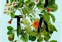gardening illustrated / by tichtach