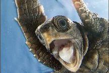 Turtles!!!!!!!! / by Lisa Davenport Zurligen