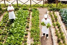 garden: vegetable / vegetable garden ideas / by cheryl springfels