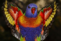Birds of a Feather / by Tara Woodard