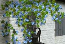 Got the Blues / by Tara Woodard