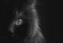 Ebony / by Tara Woodard