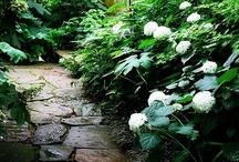 gardens / by Margaret Lillian
