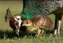 Animali > Cuccioli / Animals with their babies. / by A. Cucchiero