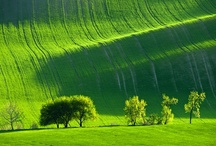Erba / Grass. / by A. Cucchiero