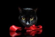 Gatti > Fondo scuro / Cats portraits on dark background / by A. Cucchiero