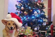 Corgis at Christmas! / by Daily Corgi